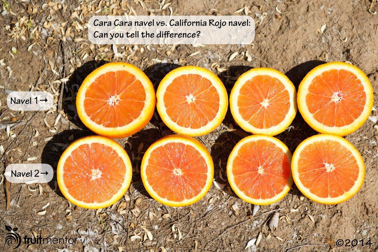 Cara Cara navel vs. California Rojo navel