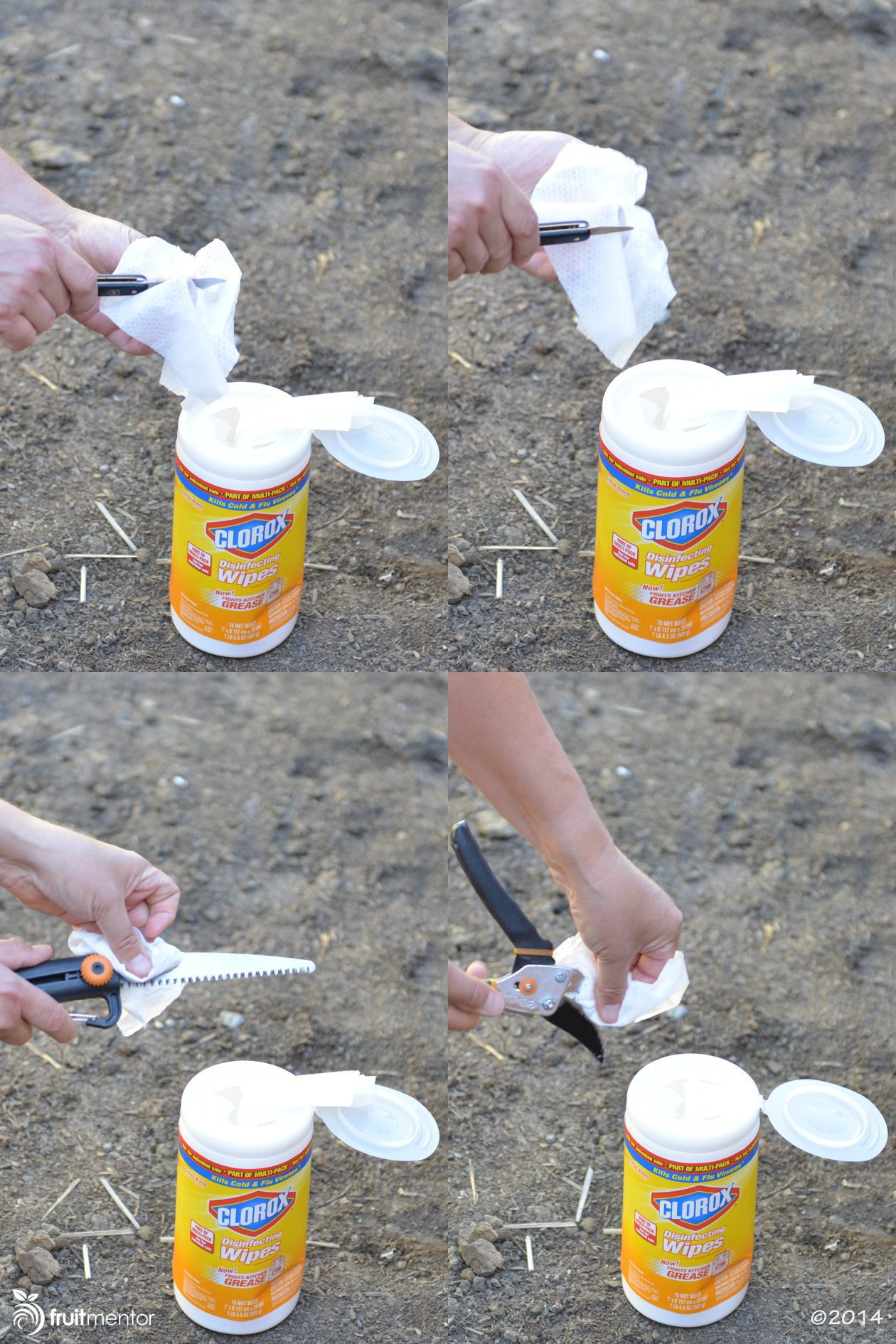 Cleaning grafting tools with Clorox wipes