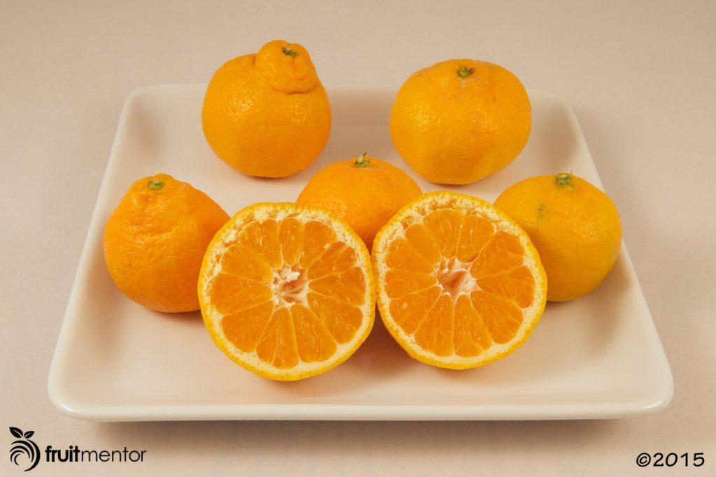 Okitsu Wase Satsuma Mandarin Oranges