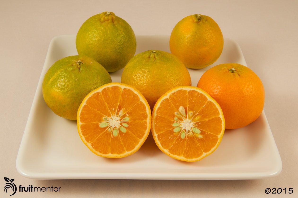 USDA 6-15-150 Mandarin Orange, also known as USDA 15-150.