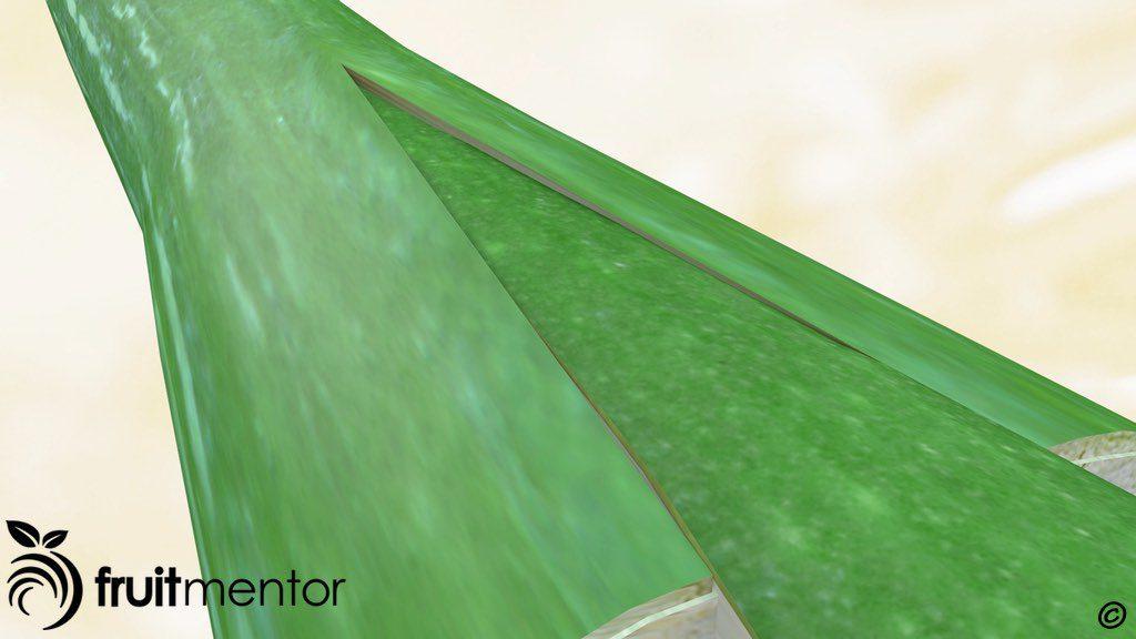 Minh họa của một mối ghép nêm cho thấy hom cây khi nhìn xéo.