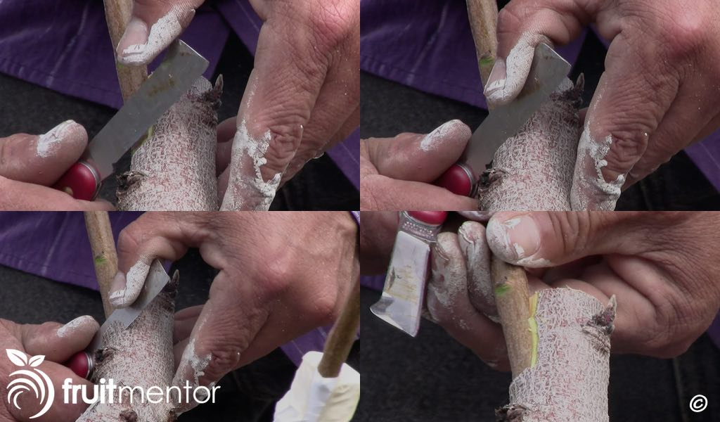 Cutting the second tongue.