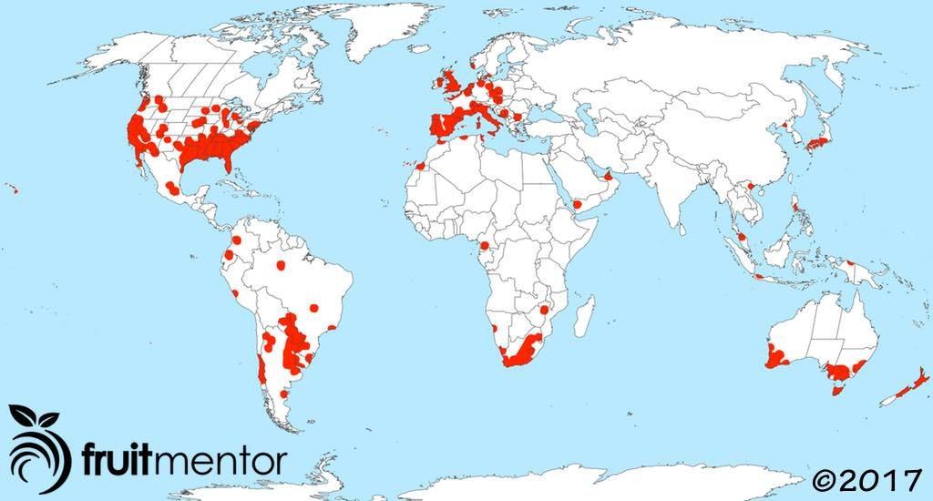 阿根廷蚁蔓延全球。