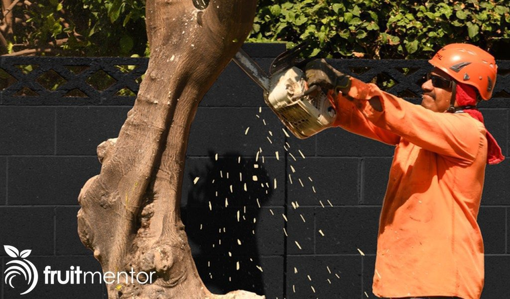 removing and destroying unloved trees.