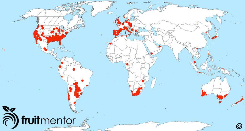 Argentine ant worldwide spread