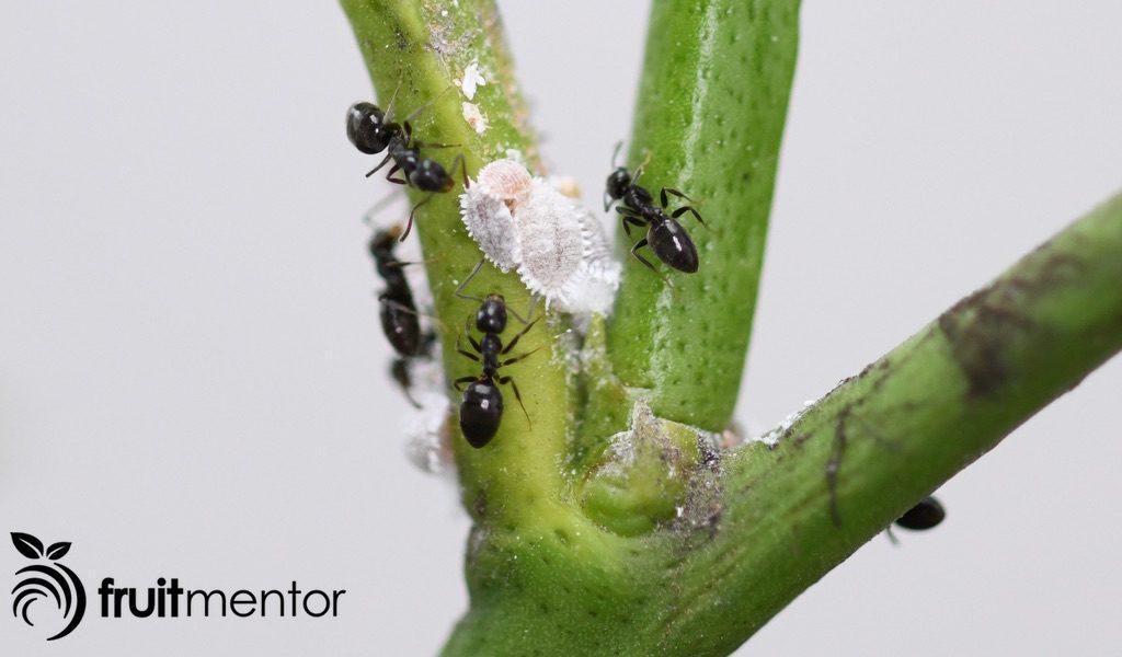 Cómo eliminar hormigas con cebo para hormigas.