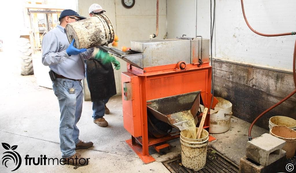 citrus seed extraction machine