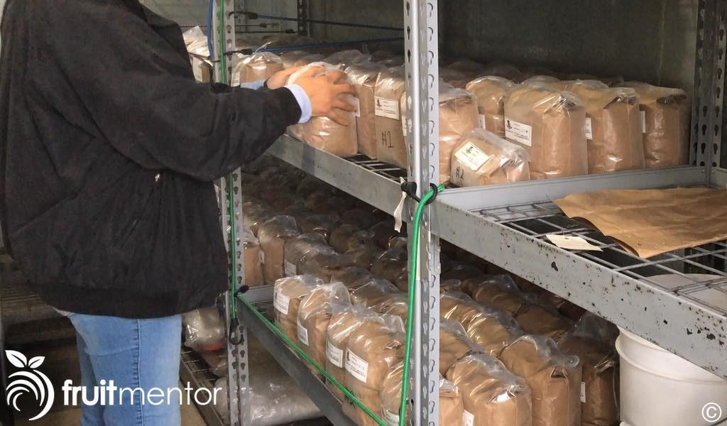 citrus rootstock seeds in cold storage