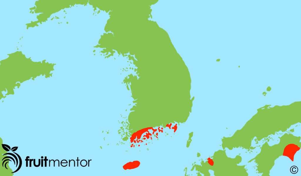 Las áreas donde se cultiva yuja/yuzu se muestran en rojo.