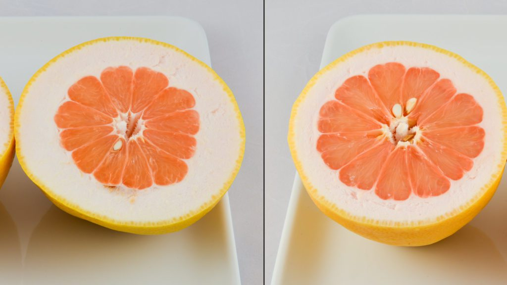 Pomelo grapefruit hybrids