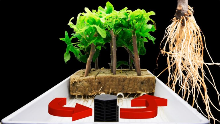 Ebb and Flow System for Easy Rooting of Fruit Tree Cuttings